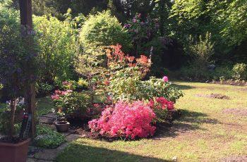 Blumenbeete im Garten