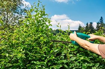 Mann mit Gartensäge