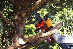 Baum sägt Baumäste