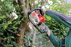 Mann sägt am Baum