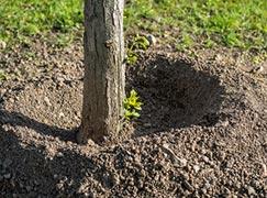 Teilansicht Baumstamm