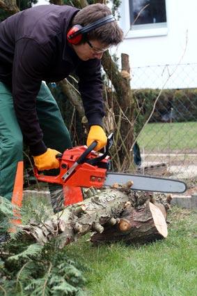 Mann sägt Baumstamm am Boden