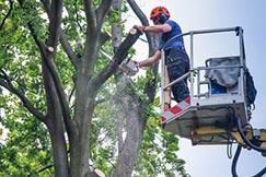 Mann auf dem Kran schneidet Baumäste